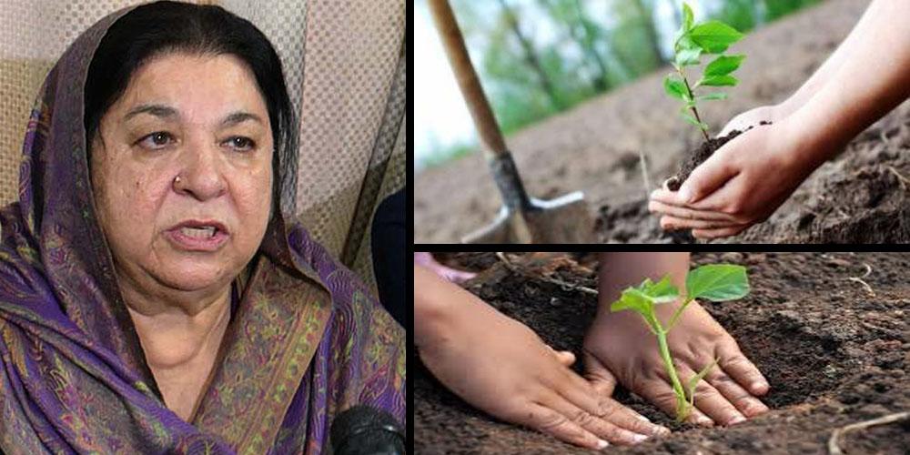 Dr Yasmin Rashid Plantation drive