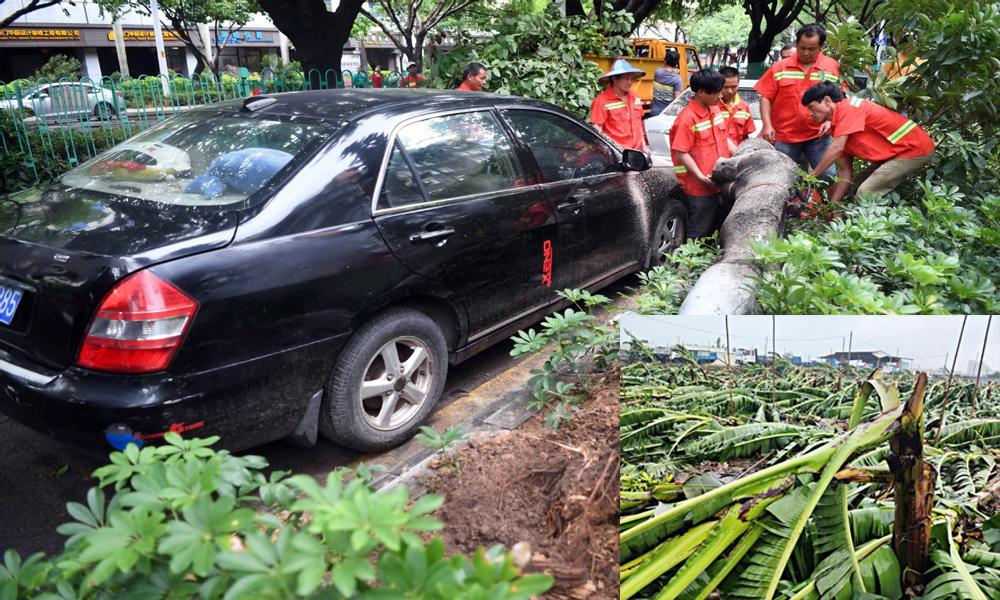 typhoon bailu