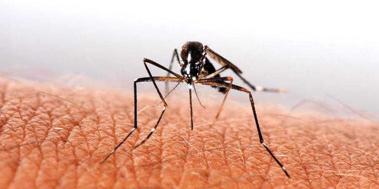 Dengue patients risen nationwide