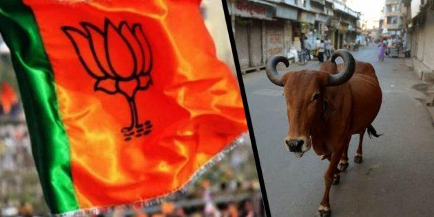 India: BJP leader demands Cow Census
