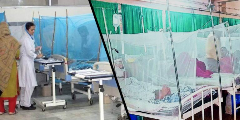 New dengue cases reported in Islamabad