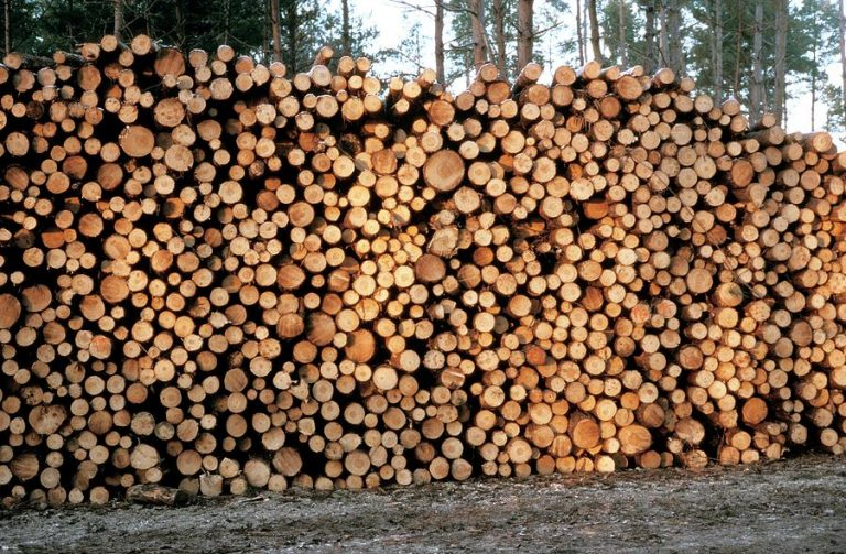 Rise in inflation causes shoot up of timber, coal by 25%
