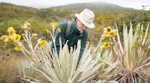 Colombian botanist