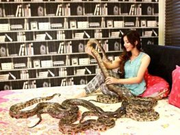 Singer-turned actor Rabi Peerzada has been acquitted in the case against having exotic animals.
