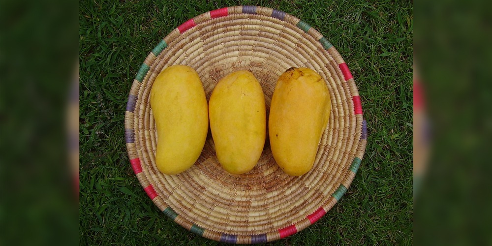 Pakistani Mango: PFVA requests to commence export from June 1