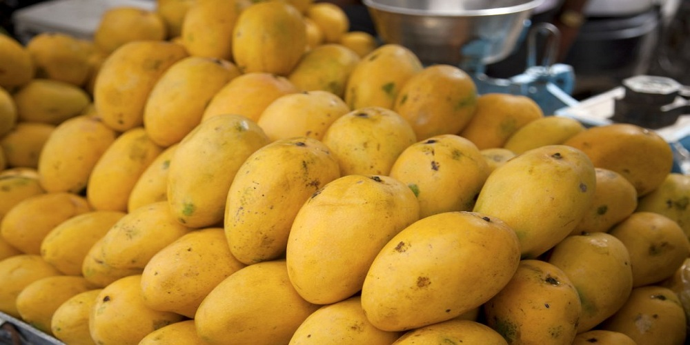 Health benefits of mangoes-the king of fruits