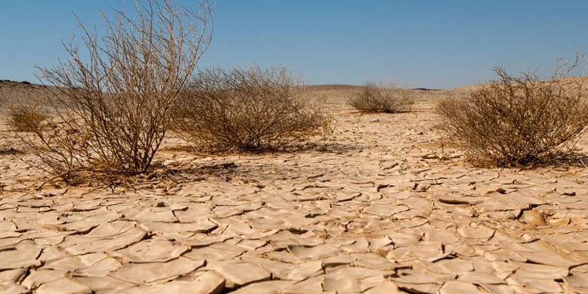 How to reduce effects of drought to prevent desertification?