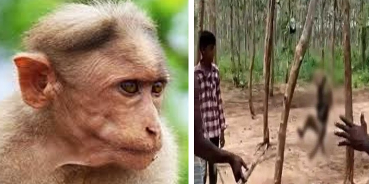 Monkey hanged till death in India by Villagers