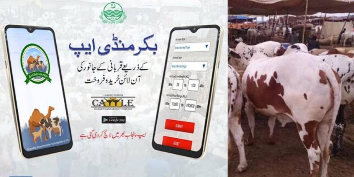 Punjab Govt launches Bakra Mandi App for Online Purchase of Sacrificial Animals