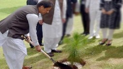 Tree planting campaign: One billion trees will be planted by next June, PM