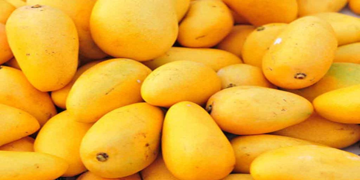 Pakistan Foreign Office Clarifies Reports Regarding Mango Diplomacy