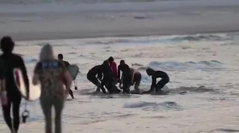 Surfer shark attack