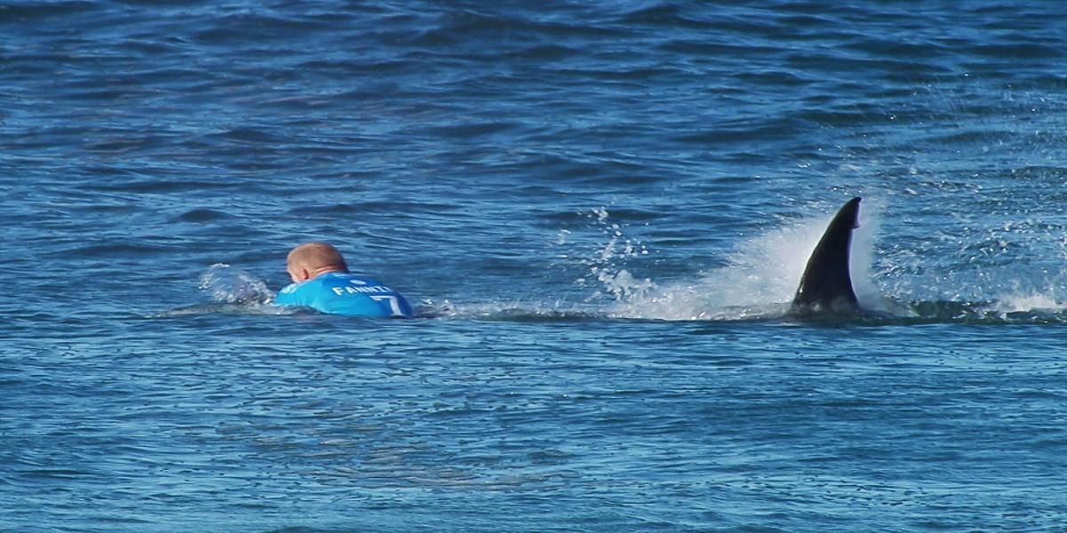 Surfer dies after shark attack