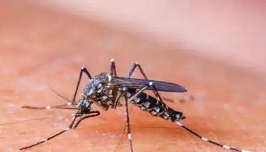 Amid Pandemic, Dengue cases bite country
