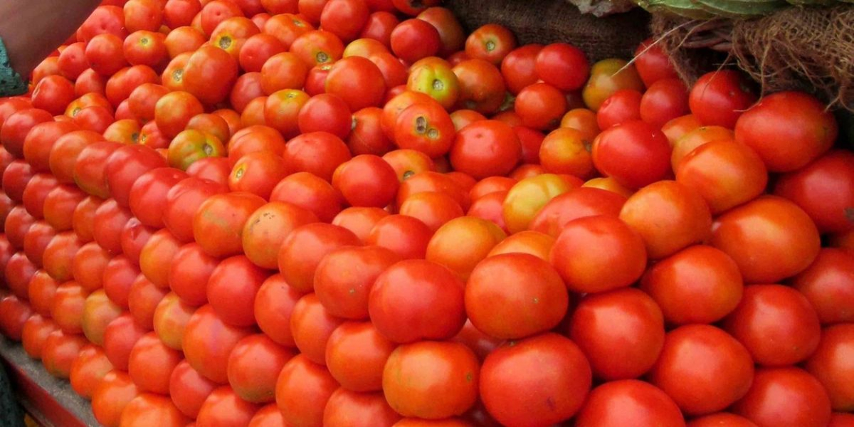 Tomatoes to import from Iran