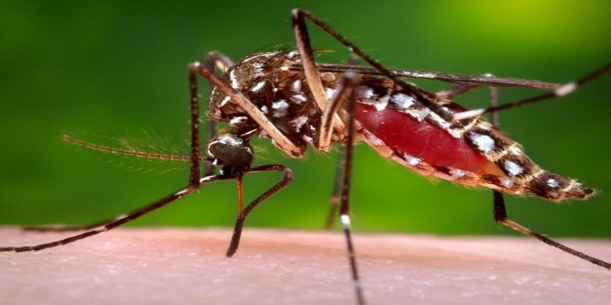 dengue cases in Karachi