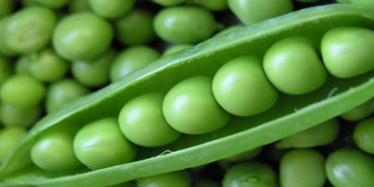 Peas health benefits