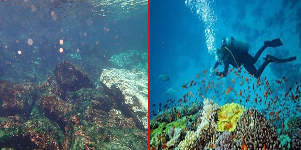 Charna Island: WWF Warns Of Serious Bleaching Of Corals