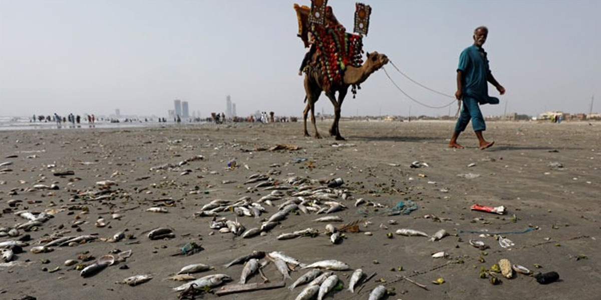 Marine Pollution Threatens Aquatic life In Karachi