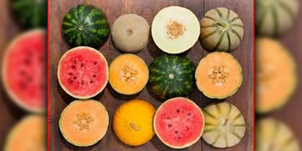Surprising Benefits Of Watermelon And Melon Seeds