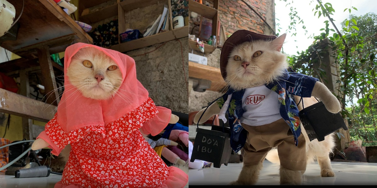 Indonesian tailor cat fashion outfits