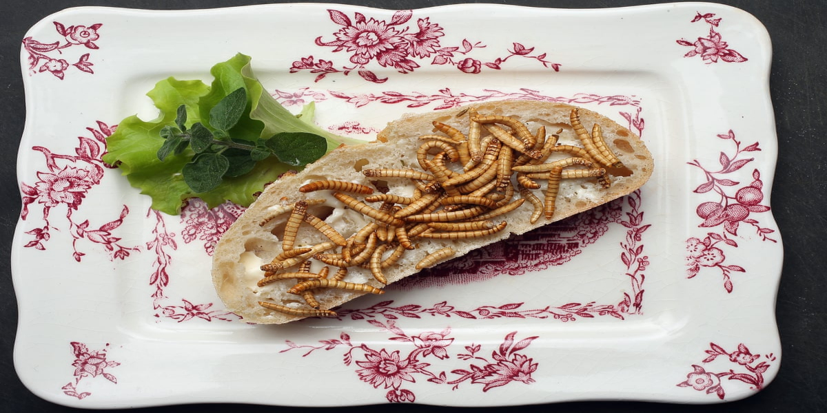 Europe Approves Edible Worms As Human Food
