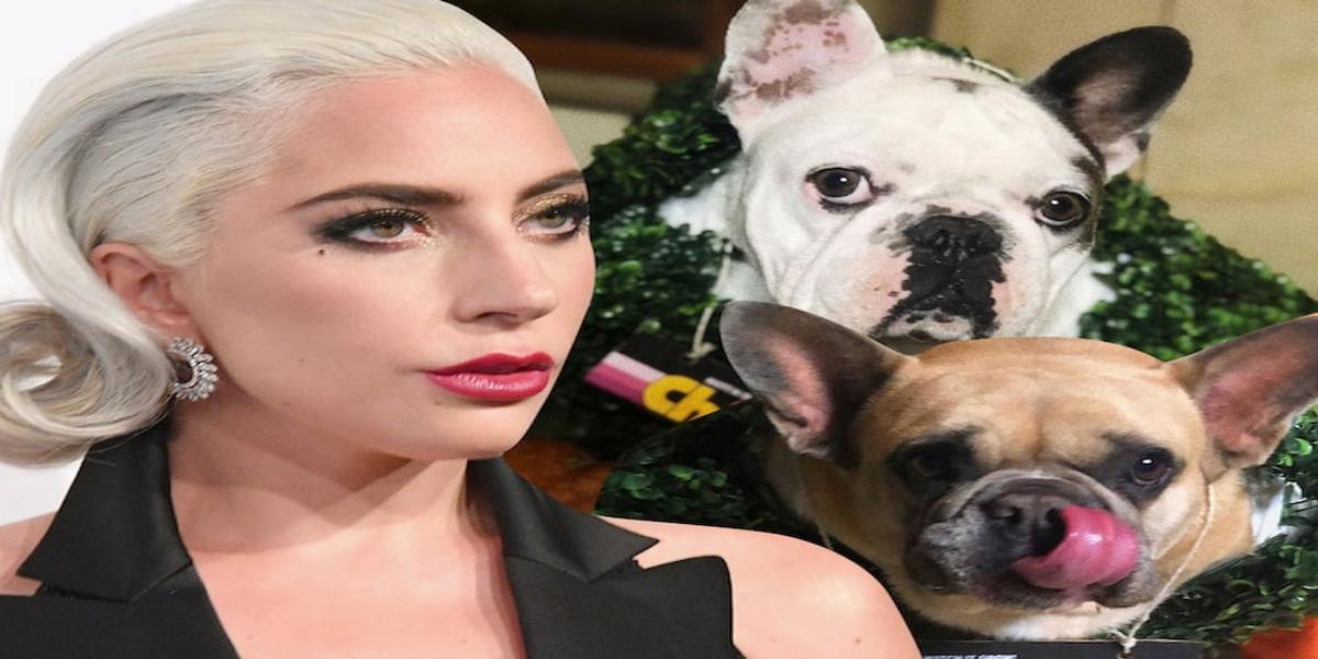 Lady Gaga dog walker