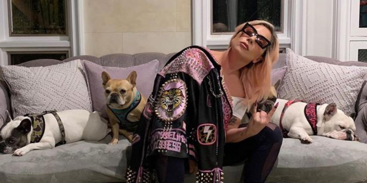 Lady Gaga dogs found