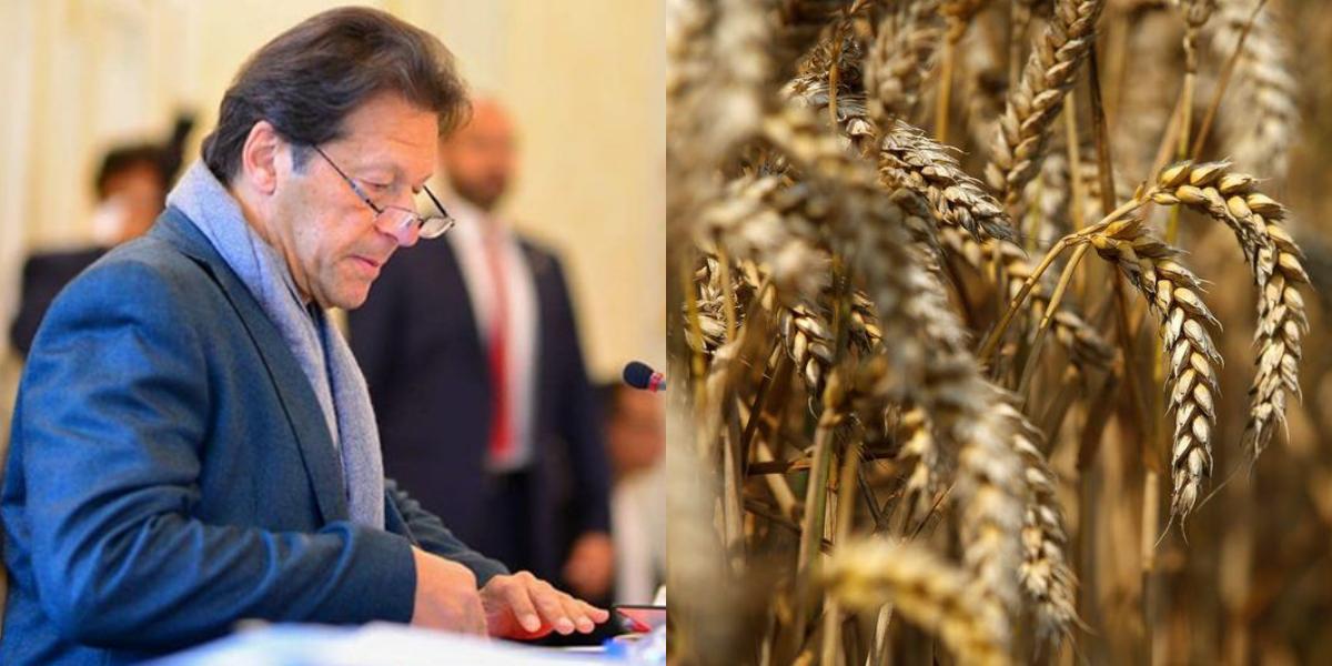 PM Imran Wheat