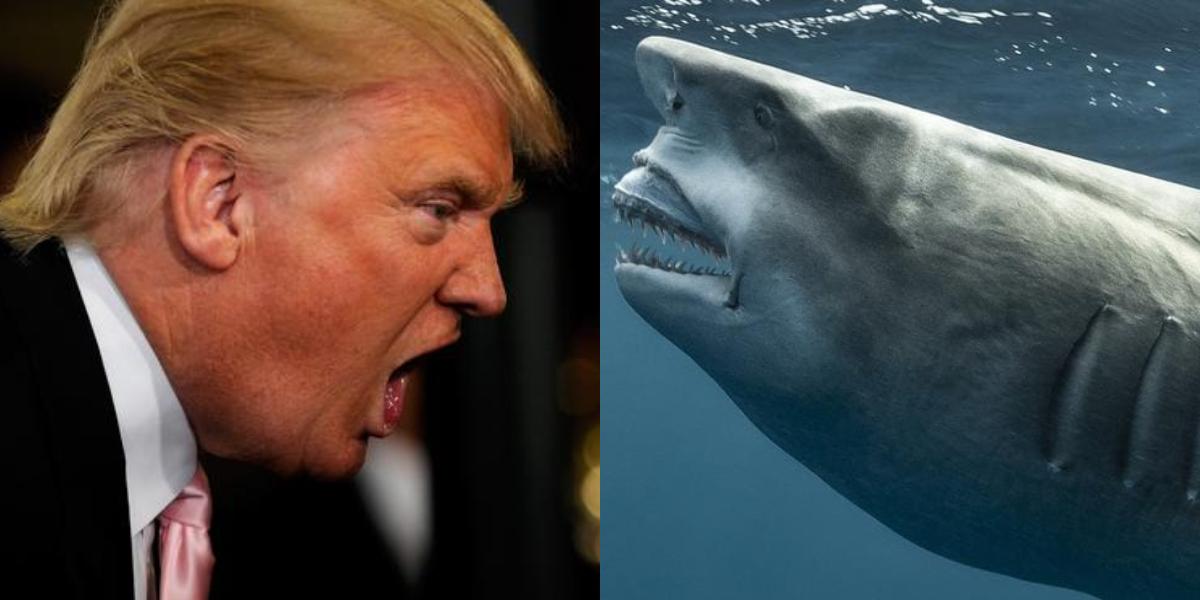 Shark Trump