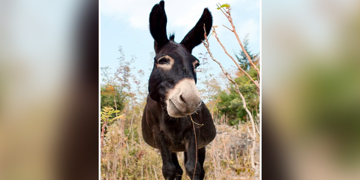 Having A Bad Day? This Donkey Swing Video Will Make Giggle