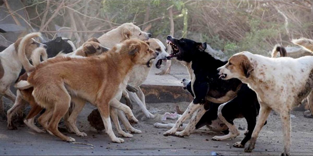 Sindh: Mad dog Bites 17 Children In Jamshoro