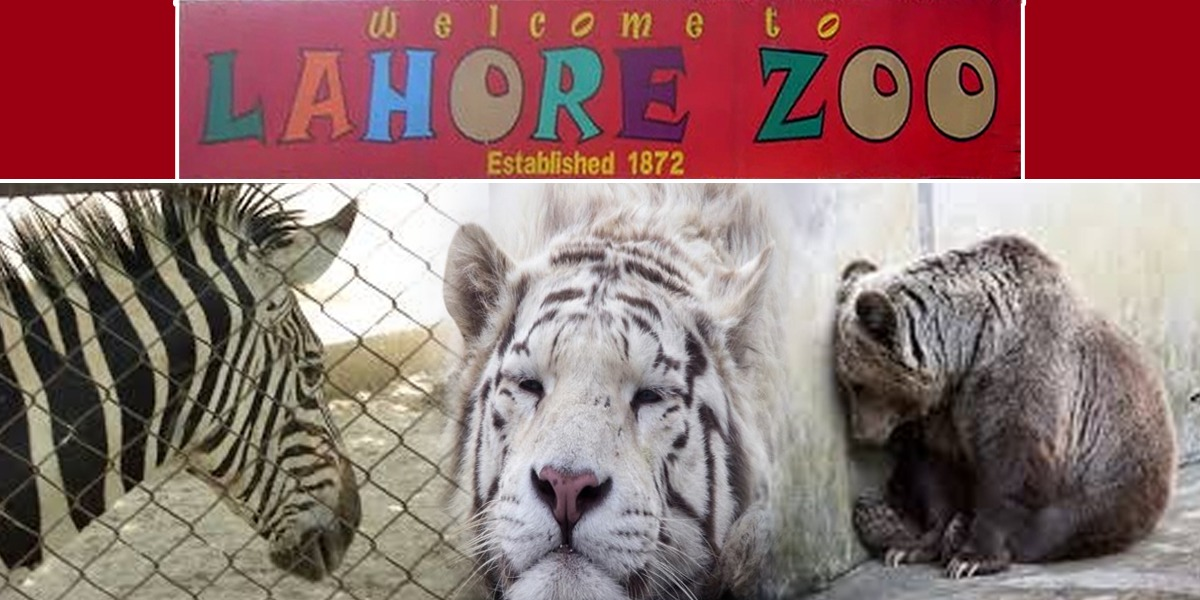 Lahore Zoo Seeks Permission To Put Down 3 Animals