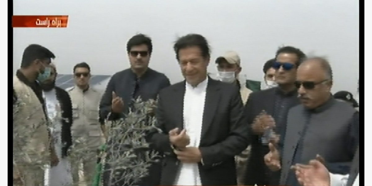 PM launches olive plantation campaign