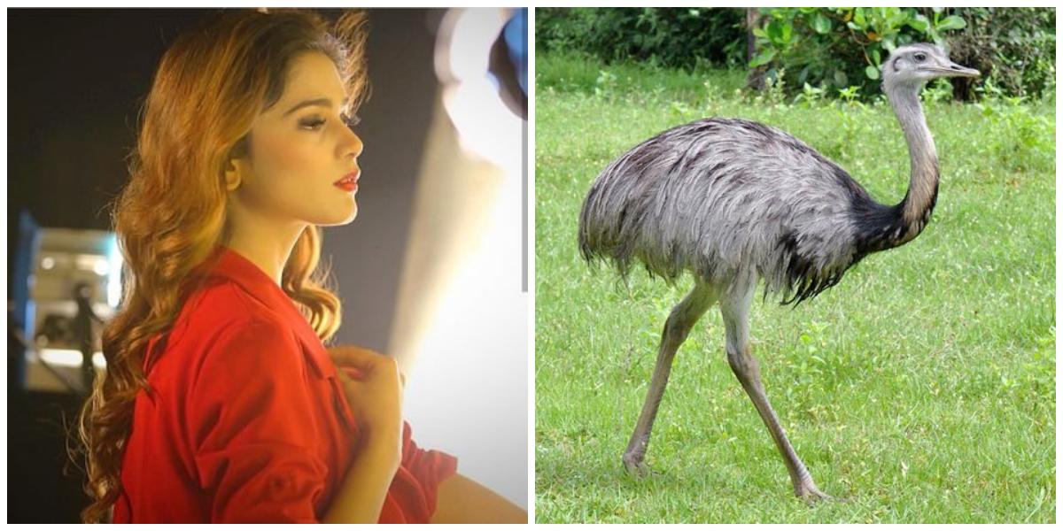 Aima Baig Ostrich