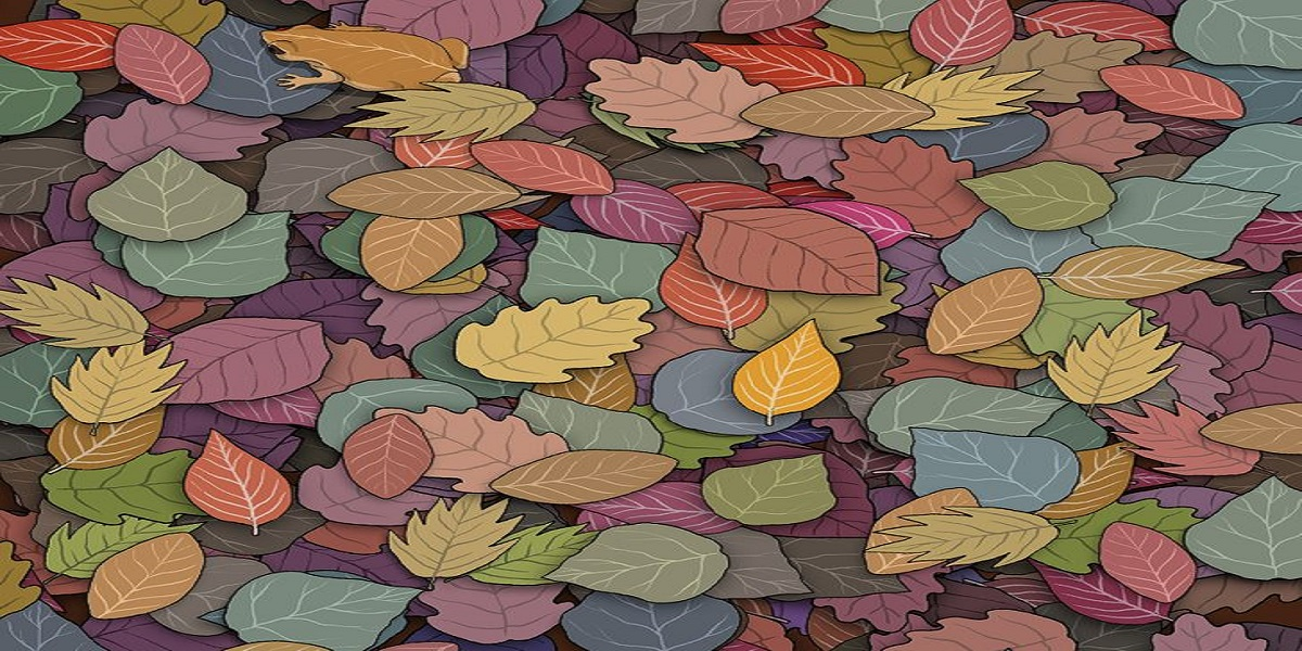 Can you find a toad between these leaves?