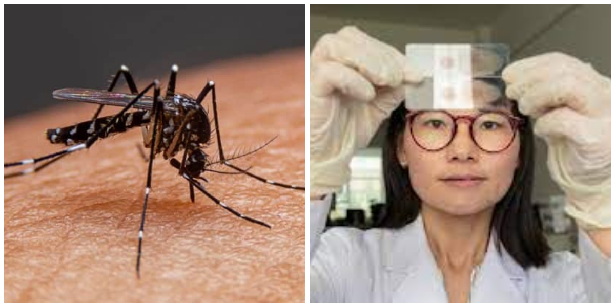 World Health Organization declares China Malaria-Free