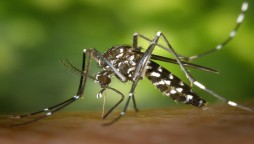 dengue-prevention approach completed a large-scale experiment