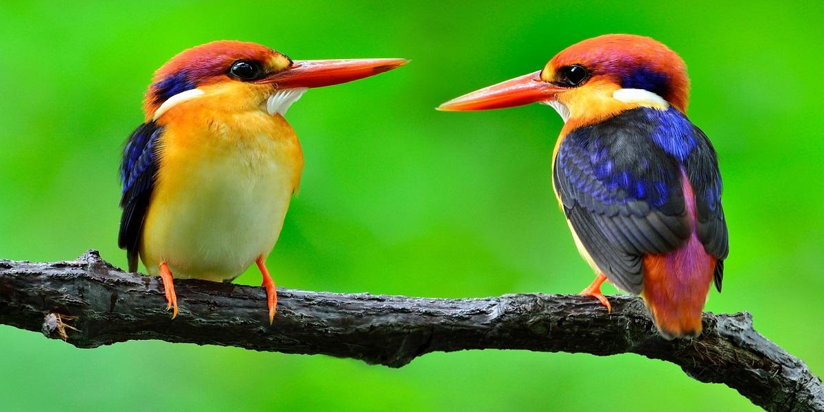 Birds See Magnetic Fields Using Quantum Mechanics