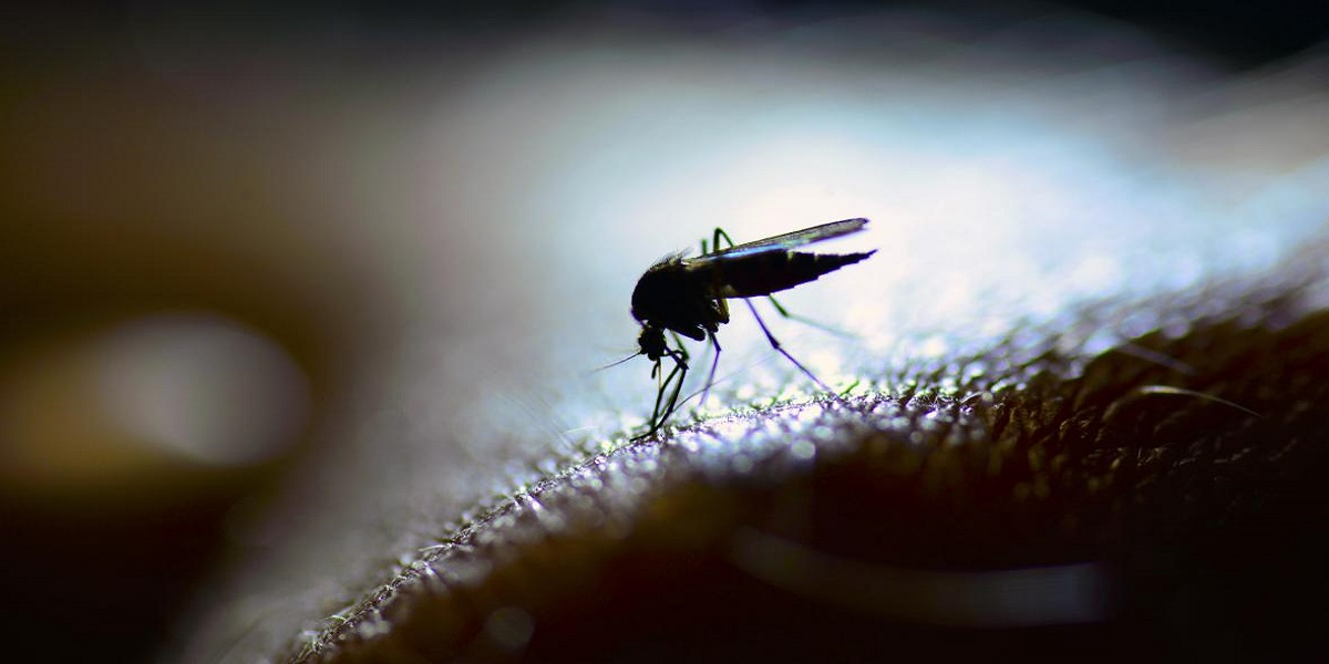The amazing mosquito hack reduces dengue fever by 77%