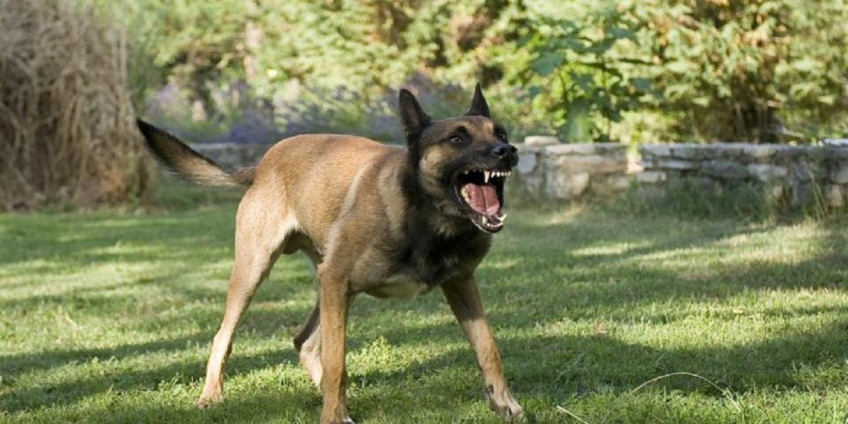 woman falls prey to dog attack