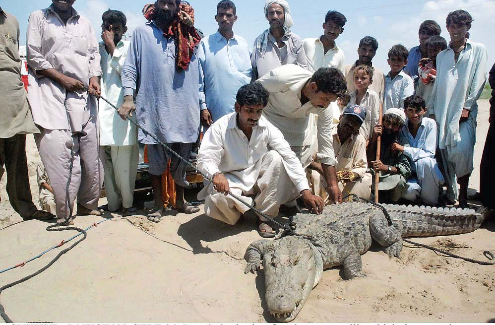 Sukkur crocodile attack kills a four-year-old girl