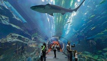 Atlantis Shark week to be held in Dubai