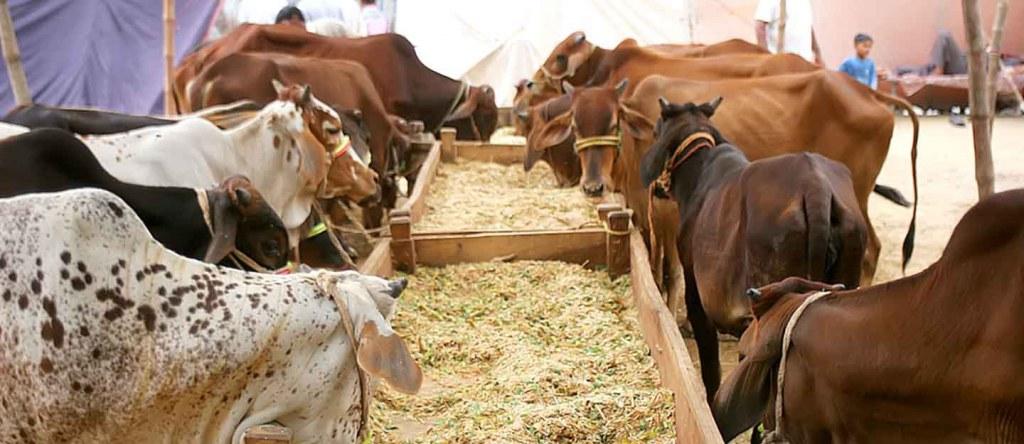 Eid-ul-Adha-in-Pakistan