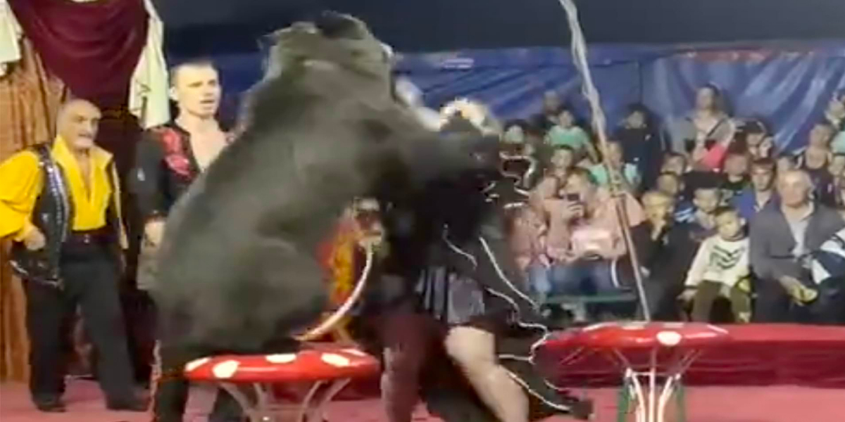 Bear attacks female
