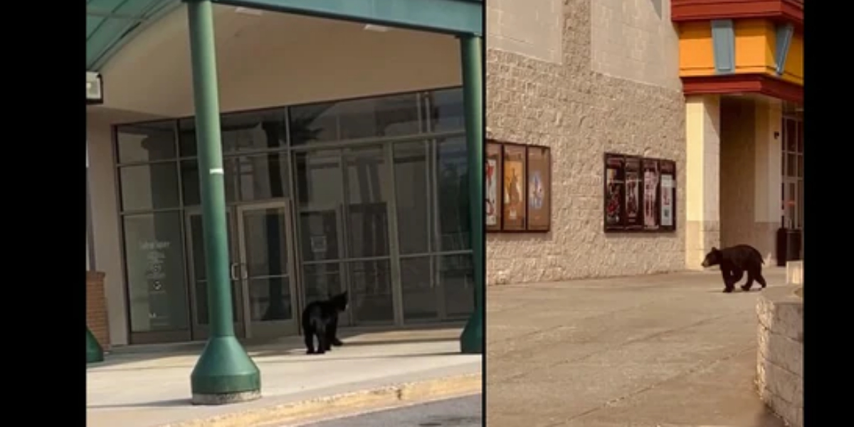 bears spotted in mall