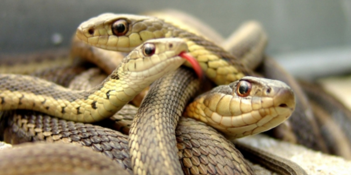 18 Alive snakes found in American couple's bed
