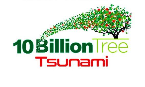 tree tsunami