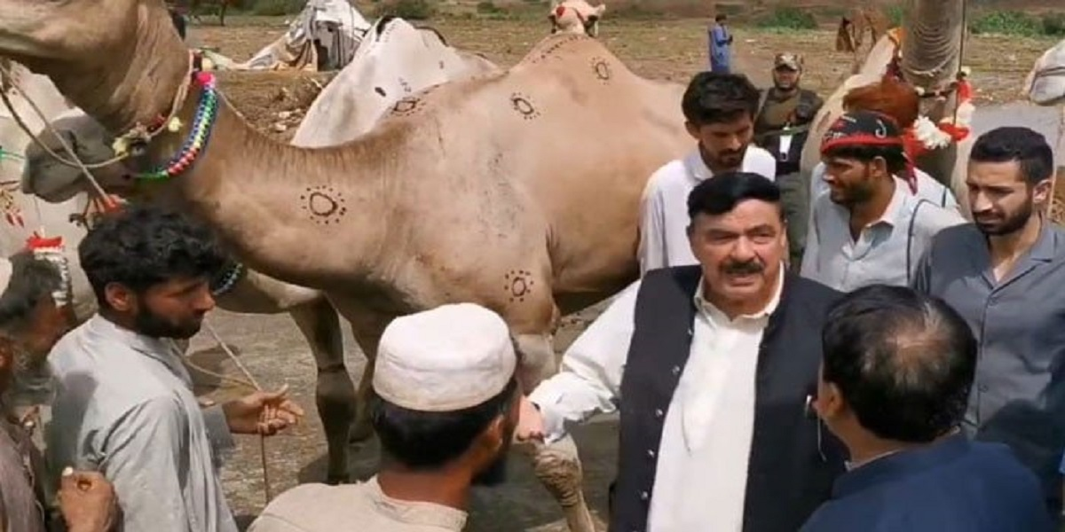 Video of Sheikh Rasheed purchasing camels goes viral