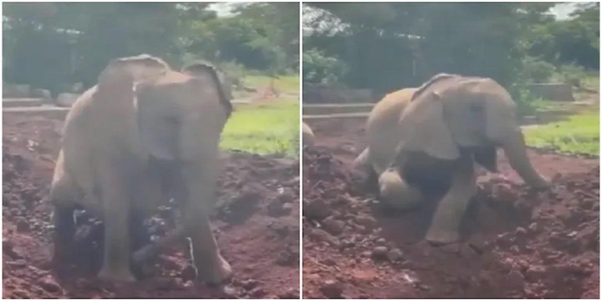 Elephant Enjoys Taking Dust Bath in Video Goes Viral